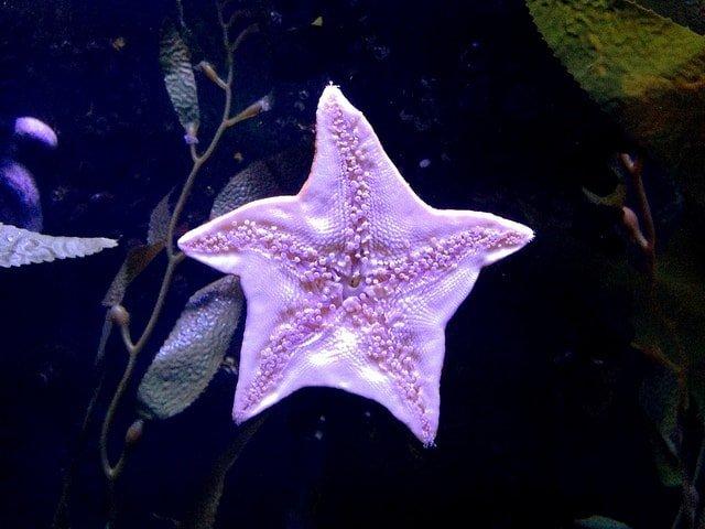 Myrtle Beach Ripleys Aquarium
