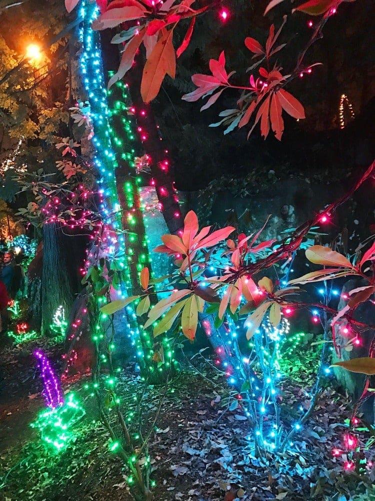 Experience Rock City's Enchanted Garden of Lights