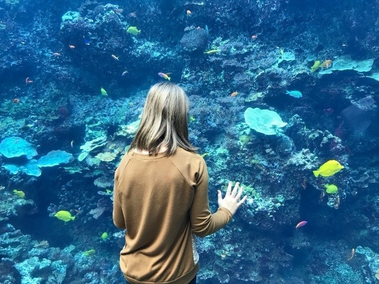 Awesome Reasons to Take the Family To The Georgia Aquarium