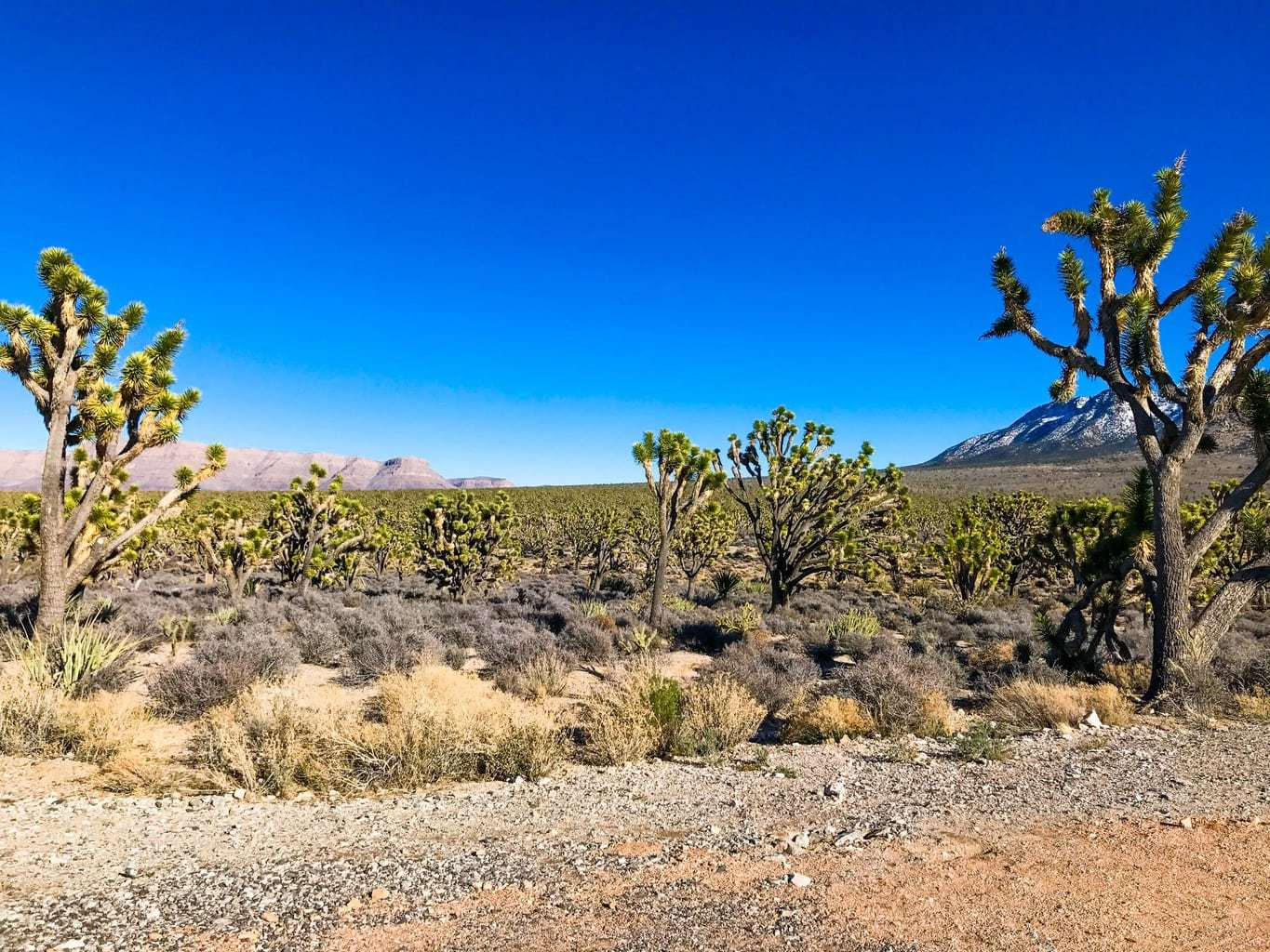 Joshua Trees in Arizona, Family Fun Vacation