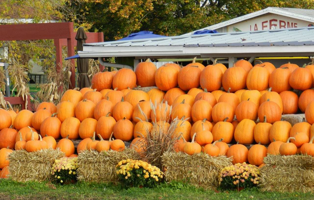 Best Pumpkin Patches In Georgia | Listed by County