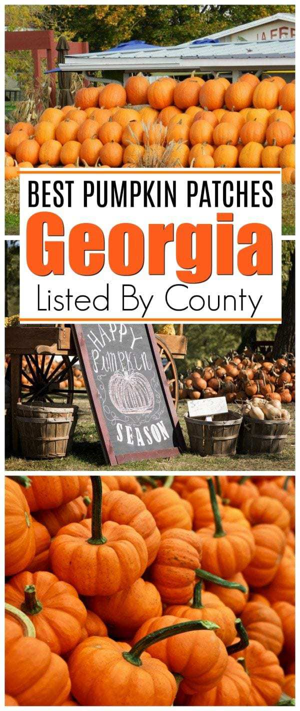Looking for the best pumpkin patches in Georgia? This is a list of the best local pumpkin patches all around Georgia, sorted by county. #Georgia #PumpkinPatches #Atlanta #Halloween #FallinGeorgia