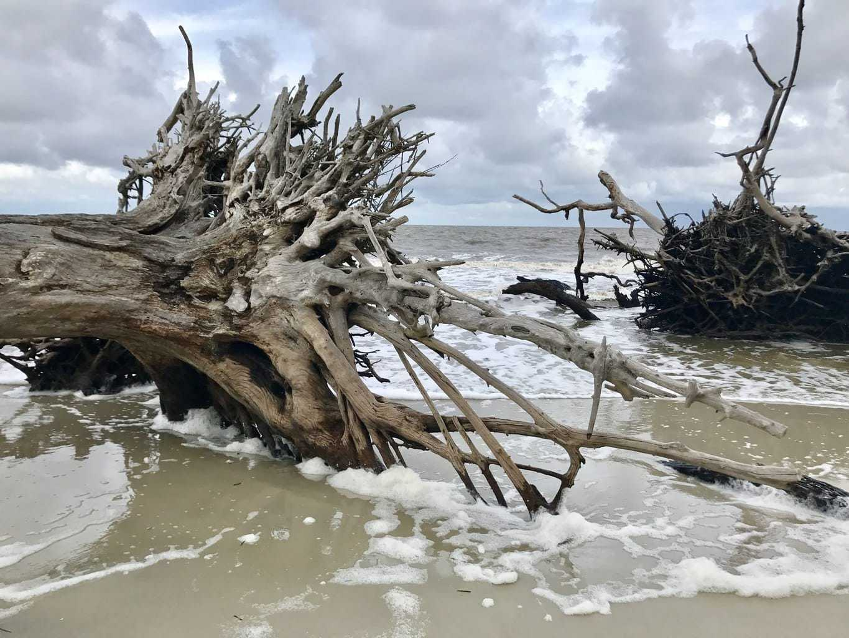Jekyll Island, Driftwood Beach