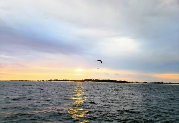 Experience a Dolphin Sunset Cruise in Panama City Beach, Florida