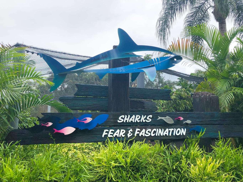 shark encounter at sea world