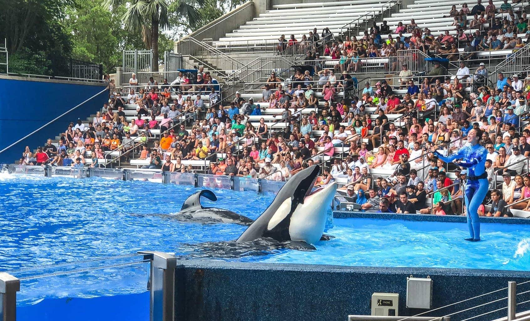 One Ocean Killer Whale Show at Sea World