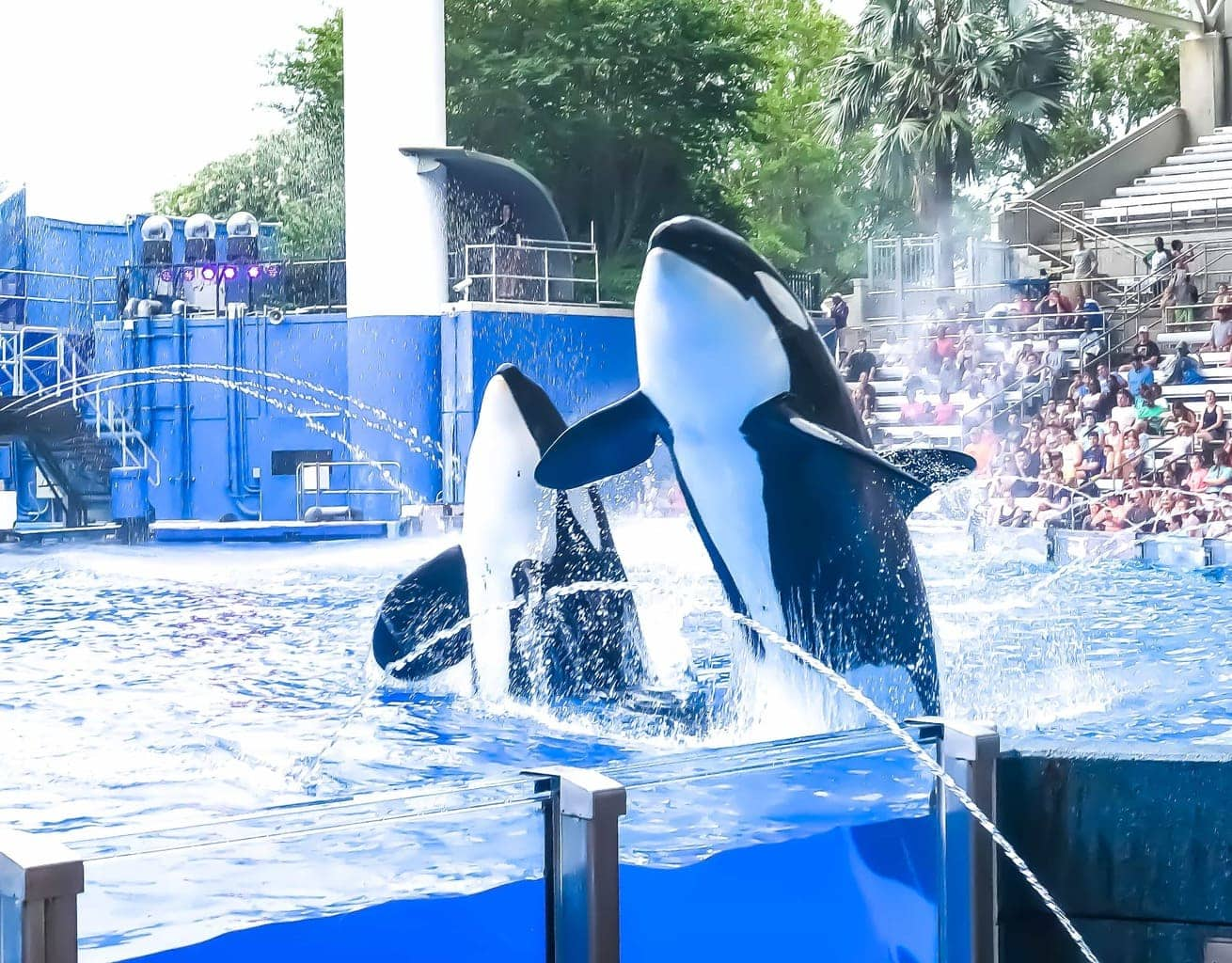 10 Top Expert Tips When Visiting Sea World Orlando With Family