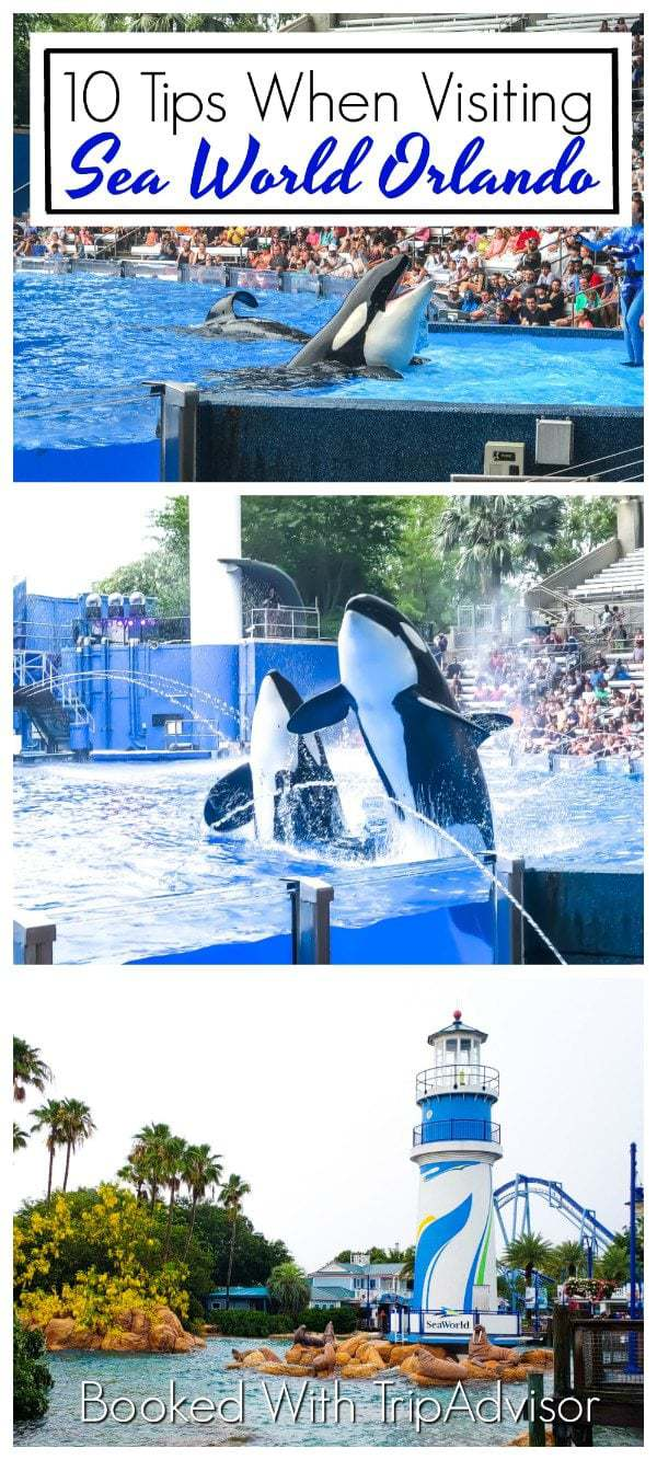 Visiting Sea World is an absolute must on your next family-friendly trip to Orlando. Here are 10 expert tips to keep in mind during your visit! @TripAdvisor #Partner #TripAdvisor #SeaWorld