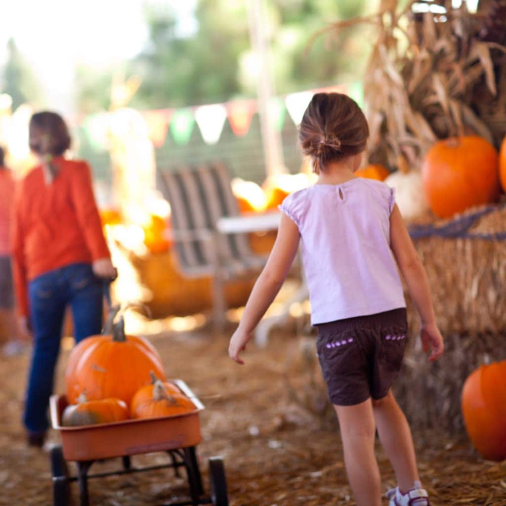 best pumpkin patches in georgia