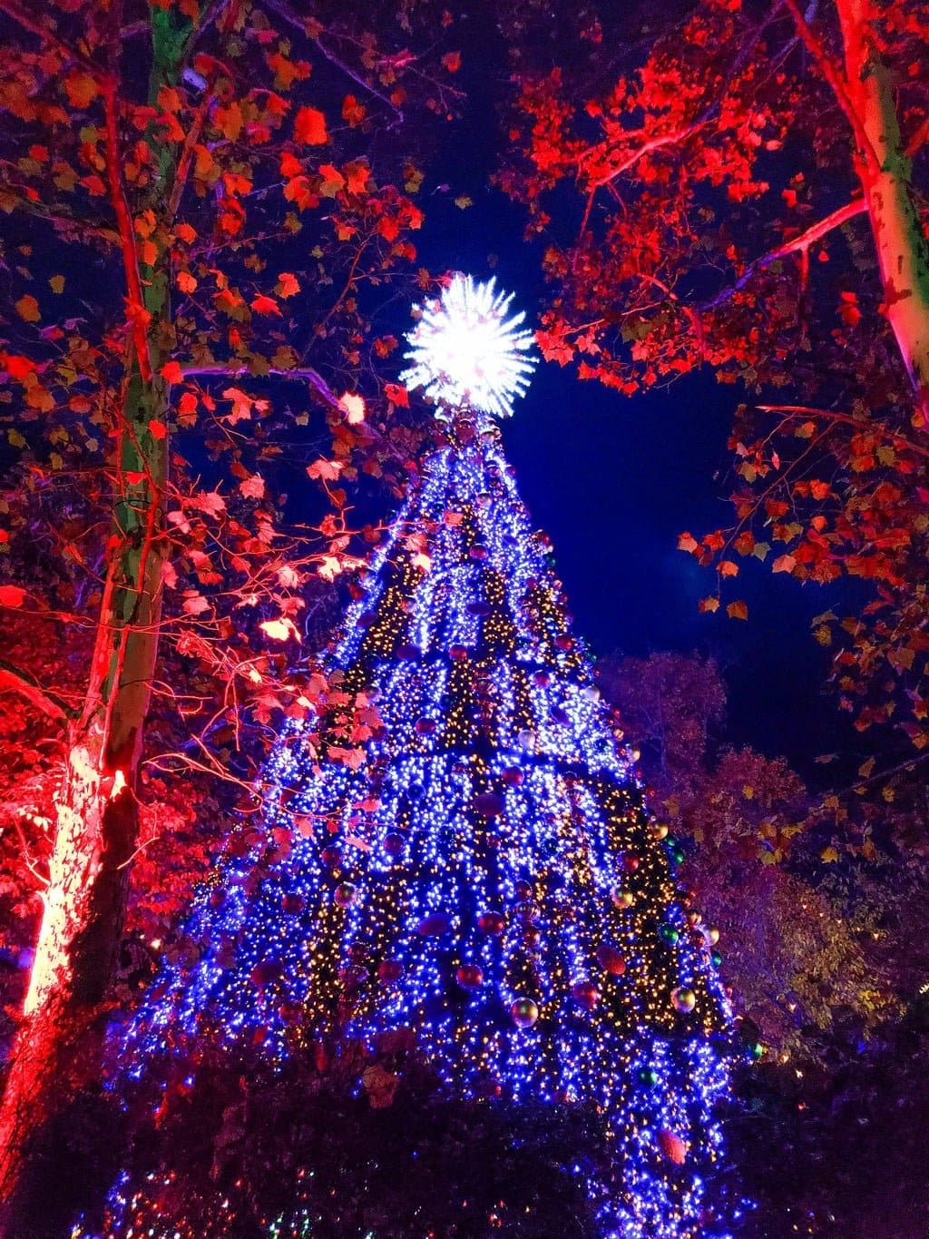 silver dollar city christmas tree light show