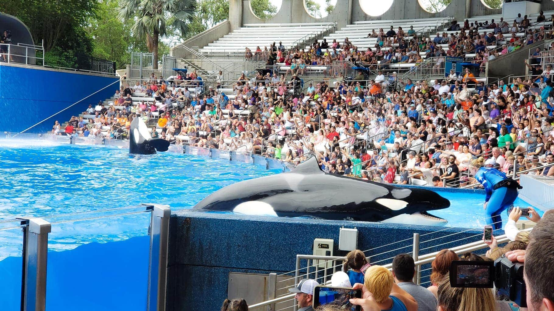 Killer Whale Show at Sea World