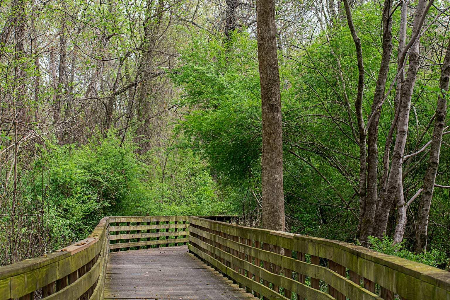 Hiking in North Georgia, Big Creek Greenway