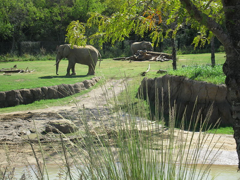 Elephant at Dallas Zoo, family friendly things to do in Dallas Fort Worth